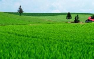 Сколько стоит налог на землю за сотку